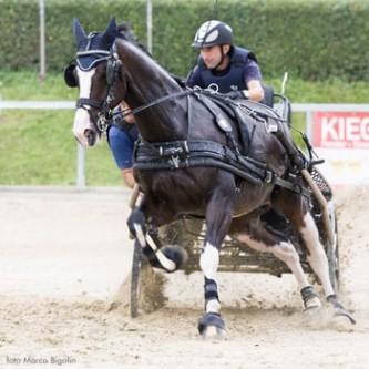 Ideal Eurotech Hest Enbet