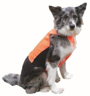 Trine Jaktdekken hund