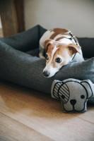 Kentucky Dog Toy Head Hundeleke