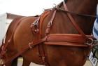 Ideal Leathertech Kombi Enbet Hest/Cob