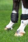 Kentucky Leather Fetlock Boots- Svart